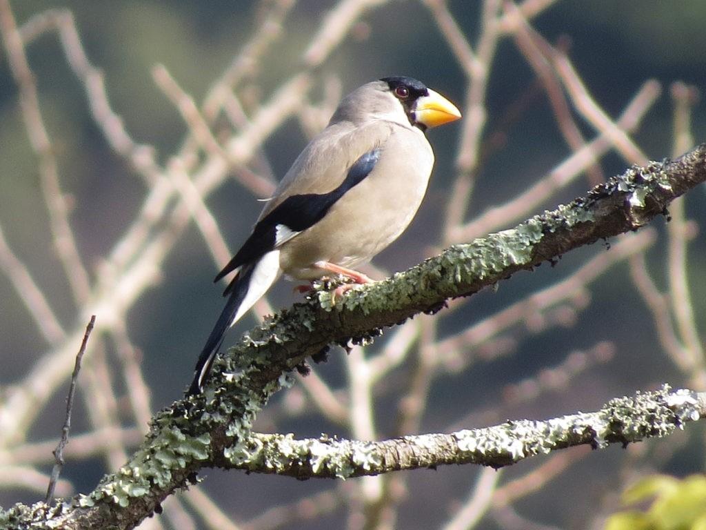 石見銀山と見つけた鳥たち