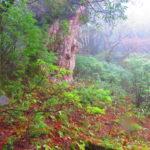 サクッと自然遺産に感動する屋久島旅!